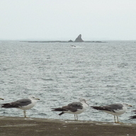 Eboshi rock and gull